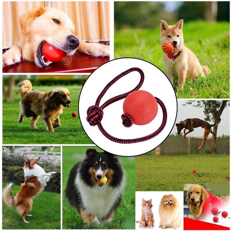 pelotas con cuerdas para perros