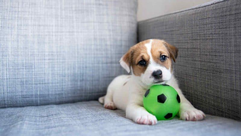 pelotas para perros