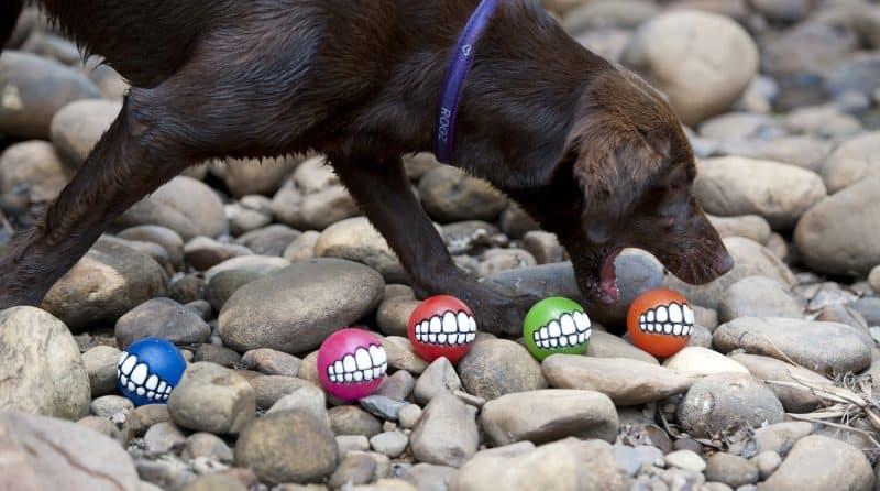 pelotas plastico blando y macizo para perros