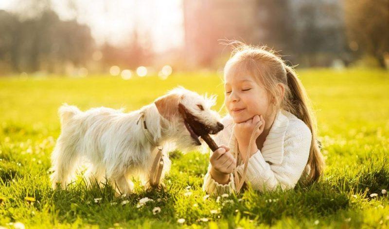 razas de perros pequeños para niños