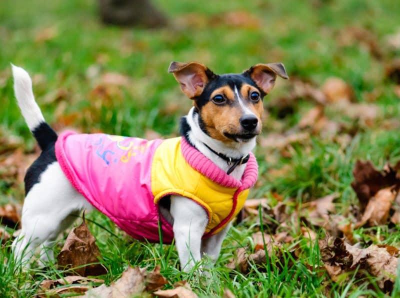 ropa para perros imagen