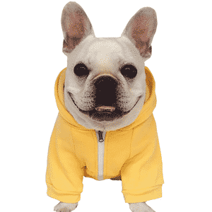 Mejor ropa para perros que puedes comprar online
