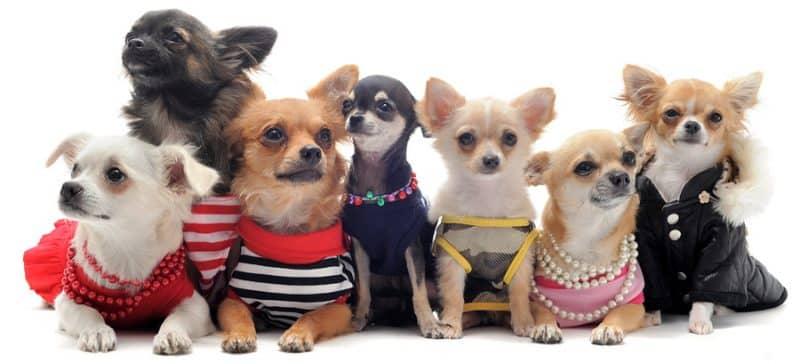 tipo de ropa para perros