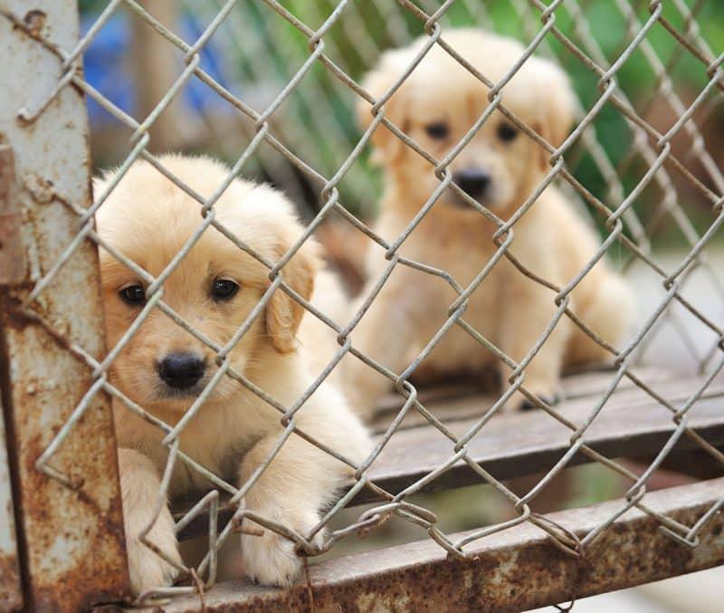 uso inadecuado de las jaulas para perros