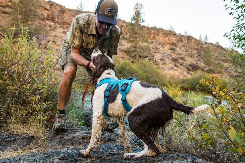 ventaja de los arnés para perros
