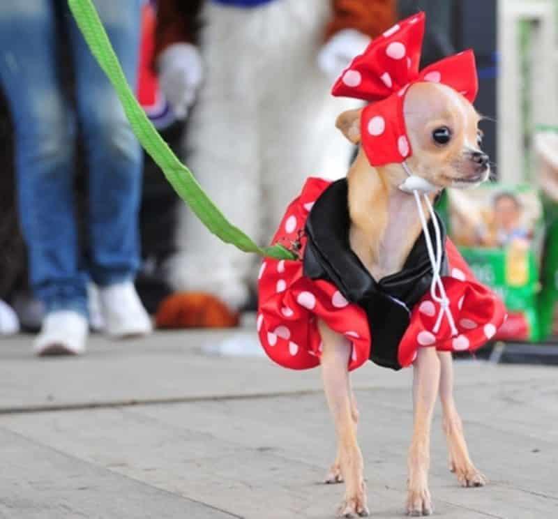 vestidos de lunares para todas las ocasiones para perros