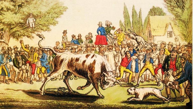ilustración que representa a un bulldog inglés enfrentando a un toro