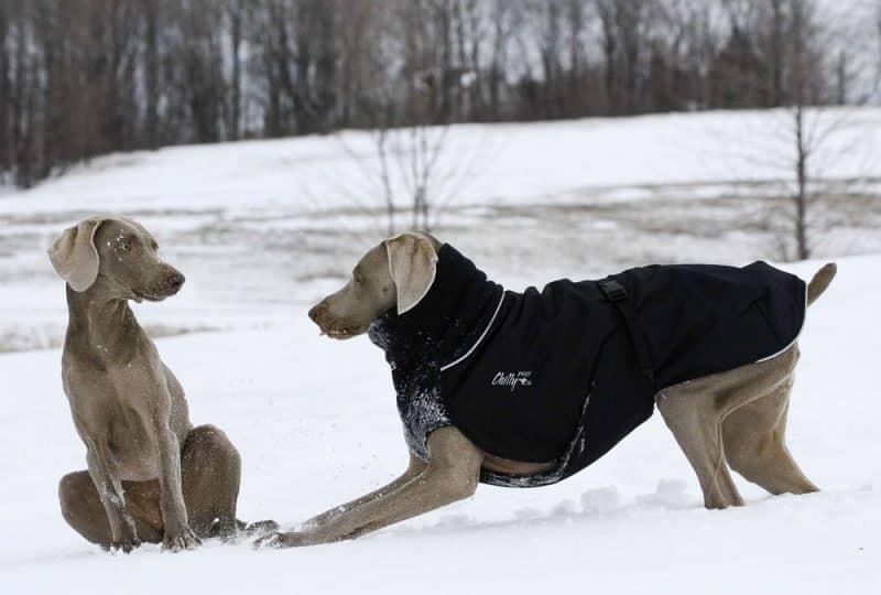 mejores abrigos para perros