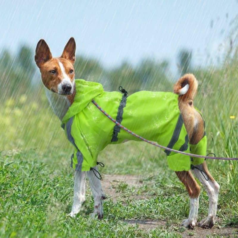 para que se usan los abrigos para perros