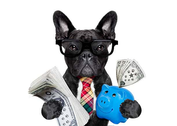 razas de perros pequeños precios