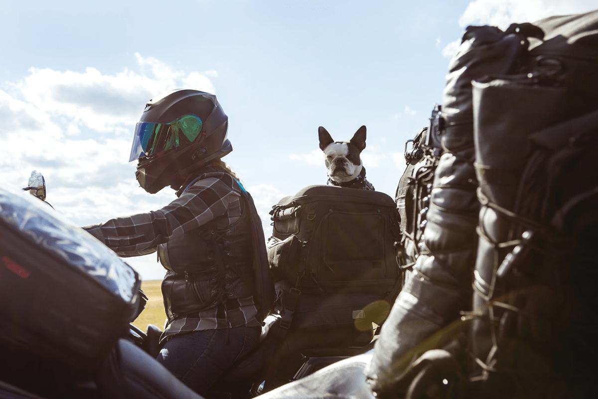 mejores bolsos para transportar perros en moto