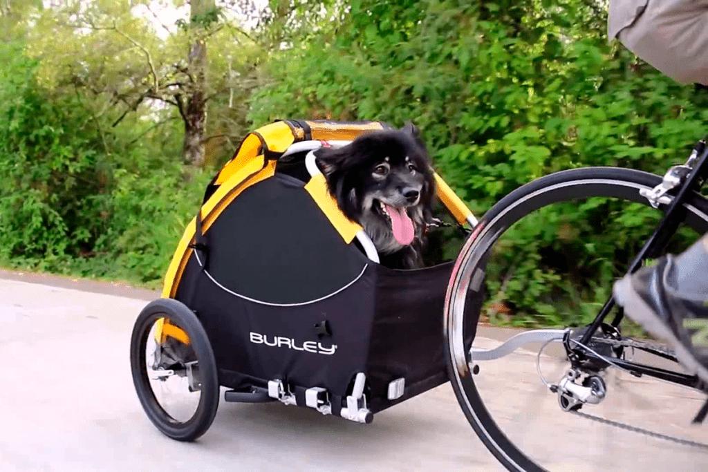 mejores transportines para perros